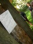 Poet Tree1